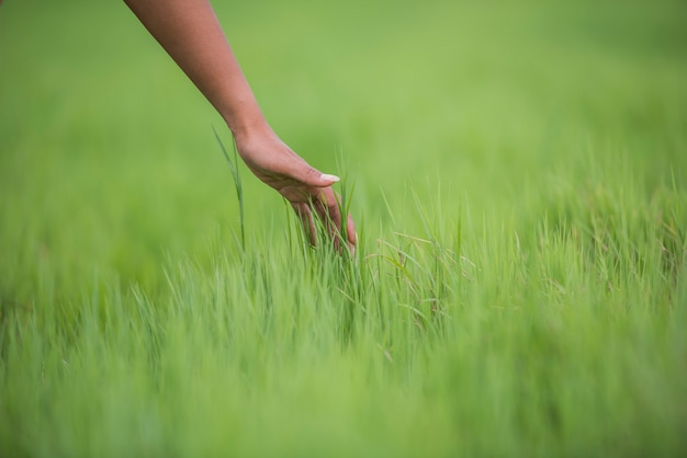 Woman's hand touching the green grass Free Photo