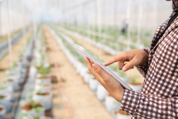 Woman science assistant, agricultural officer. in greenhouse farm research melon Free Photo