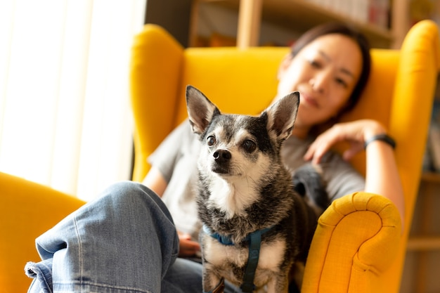 Woman sitting on a yellow couch with black chihuahua dog looking Premium Photo