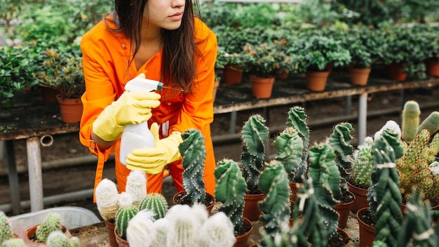 Woman spraying water on plants in greenhouse Free Photo