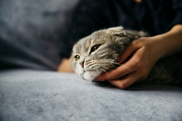 Woman stroking cute lazy cat Free Photo