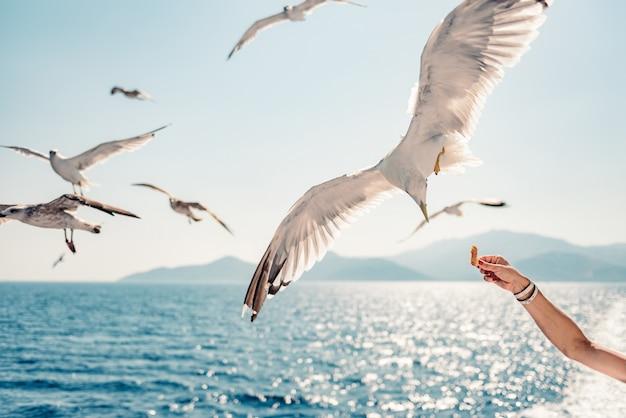 Woman traveling on ferryboat and feeding seagulls Premium Photo