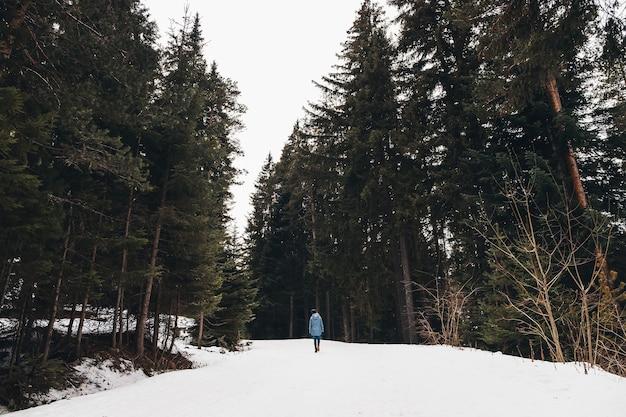 Женщина гуляет в зимнем лесу. авантюрист, гуляет среди огромных сосен по заснеженной дороге. замечательное путешествие по зимней глуши. вид сзади. Premium Фотографии