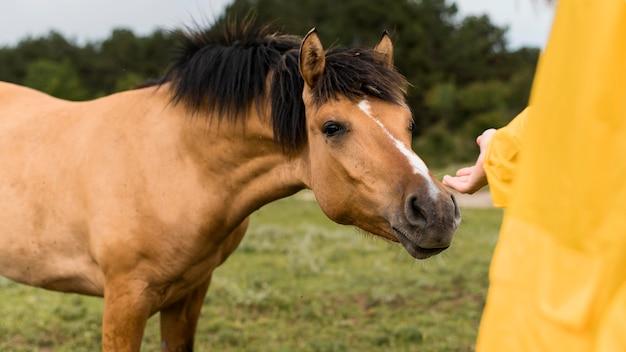 Donna che vuole toccare un cavallo selvaggio Foto Gratuite