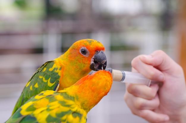 Women feeding birds through a syringe Premium Photo
