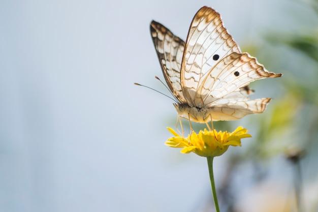 Чудесная бабочка на одуванчике Premium Фотографии