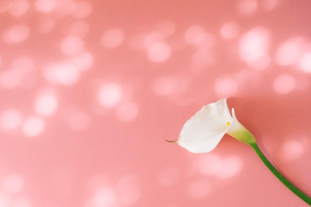 Wonderful fresh white flower Free Photo