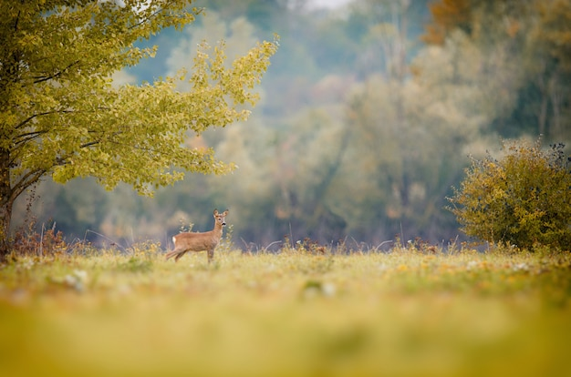 Wondering deer standing in a grassy field Free Photo