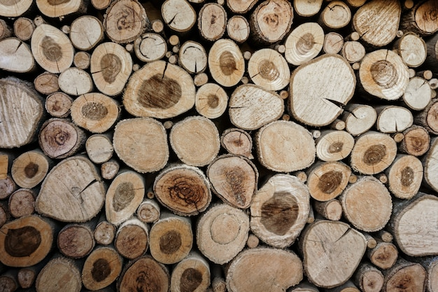 Wood circles pattern of cutted tree trunks. Premium Photo