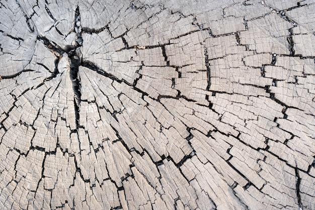 Wood larch texture of cut tree trunk, close-up. stump wood. Free Photo