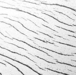 Wood pattern b&w Free Photo