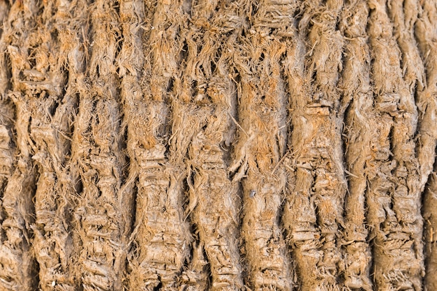 Wood trunk texture in close up Free Photo