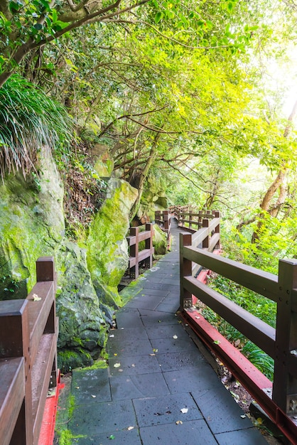 Wood walkway in garden at cheonjeyeon falls , jeju island Premium Photo