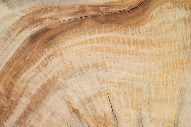 Wood wall textures Free Photo