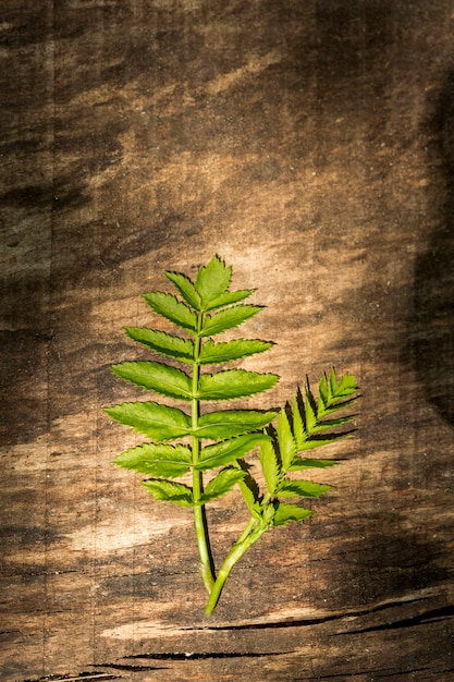 Wooden background with fern leaves Free Photo