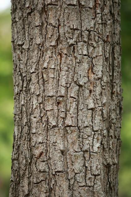 Wooden bark texture Premium Photo