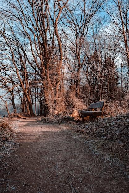乾燥した葉と公園で日光の下で草に囲まれた経路上の木製ベンチ 無料写真