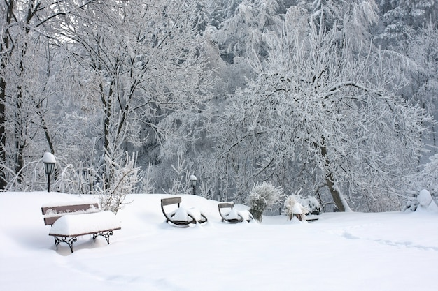 Wooden benches covered with snow near the trees on the snow-covered ground Free Photo