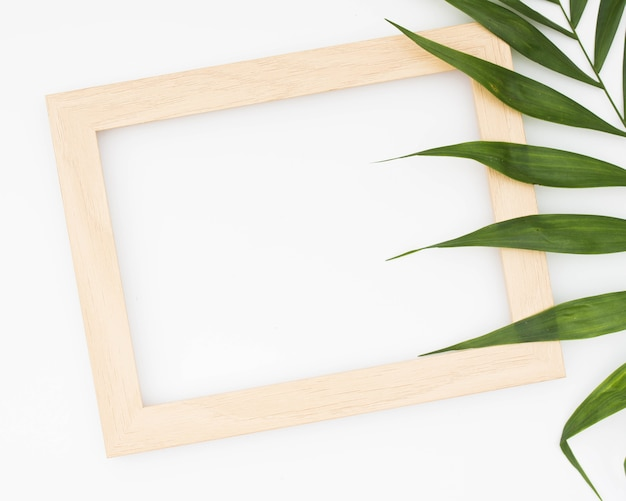 Wooden border of picture frame and green palm isolated on white background Free Photo