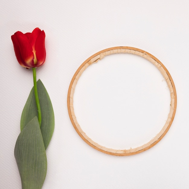 Wooden circular frame near the red tulip on white backdrop Free Photo