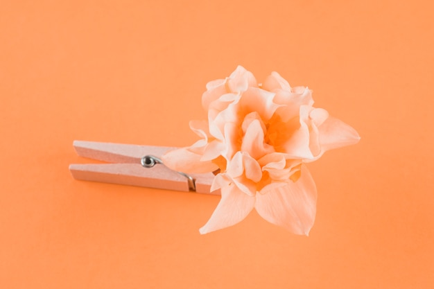 Wooden clothespin and flower on peach background Free Photo