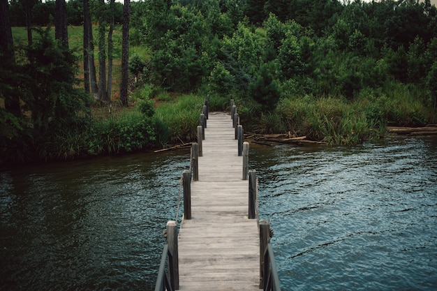 Wooden landing stage boardwalk leading from lake to forest Free Photo