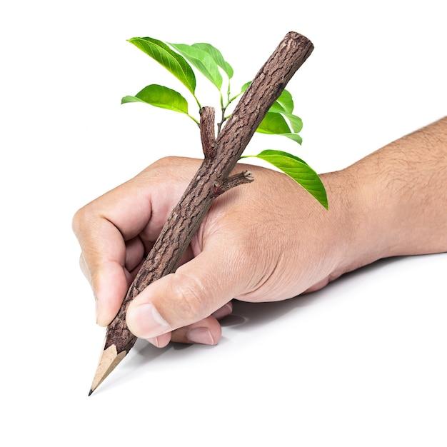 Деревянный карандаш в руке, изолированные на белом фоне Premium Фотографии