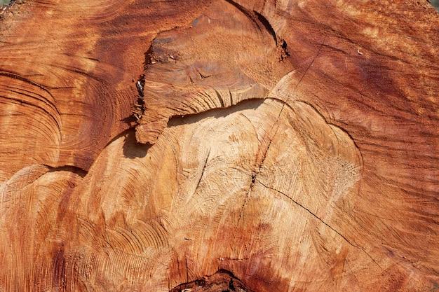 Wooden stump background. Free Photo