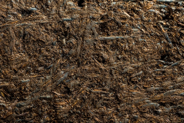 Wooden texture background, abstract texture Premium Photo