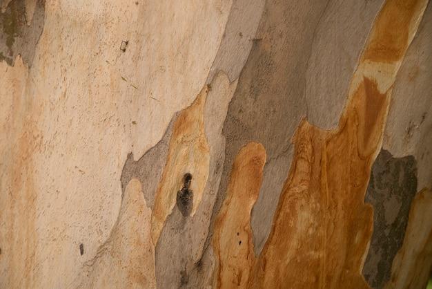 Wooden texture. platan tree Free Photo