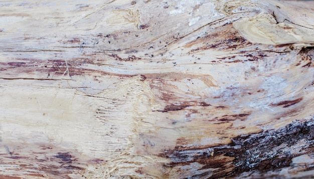 Wooden tree section. wooden empty cutting board. top view of a tree stump Premium Photo