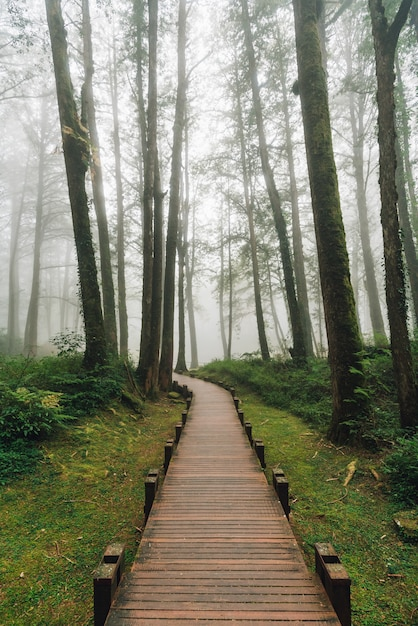 Wooden walkway that leads to cedar trees in the forest with fog in alishan national forest recreation area in chiayi county, alishan township, taiwan. Premium Photo