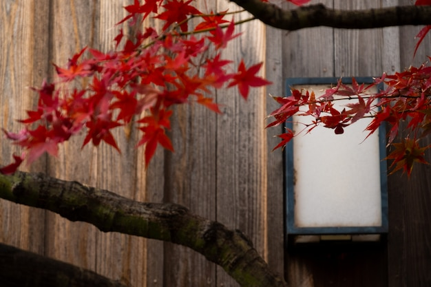 Wooden wall of window and old house in japan Premium Photo