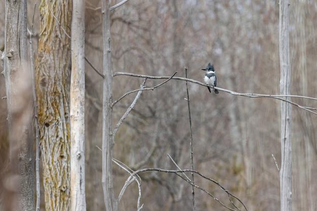 Picchio in piedi su un ramo di albero con uno sfondo sfocato Foto Gratuite