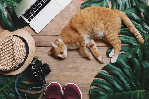 Концепции баланса работы на дому, удаленной работы и баланса продолжительности службы с кошкой, лежащей перед ноутбуком на деревенском деревянном фоне с тропическими листьями monstera, шляпа, камера и спортивная обувь Premium Фотографии