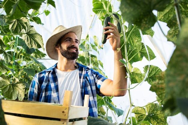 きゅうりを手に取って市場販売の準備をしている労働者 無料写真
