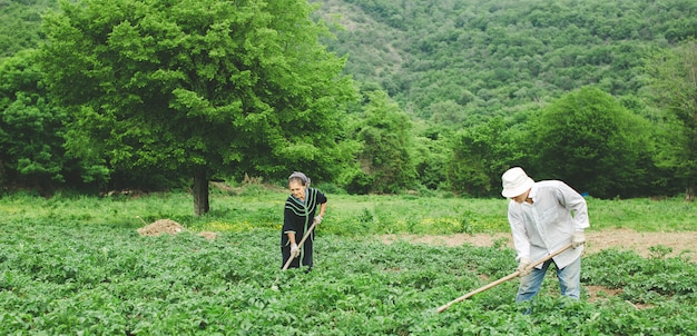 Workers planting vegetables in the farm with equipments. Free Photo