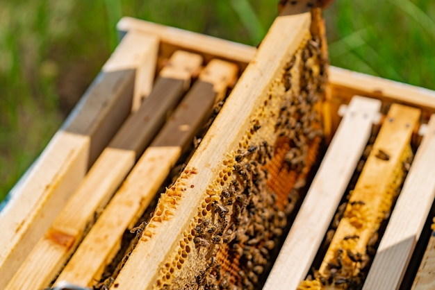 Working bees in a hive. Premium Photo