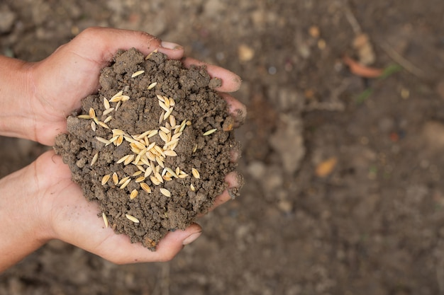 The world food day, a man's hand embraces soil with paddy seeds on top. Free Photo