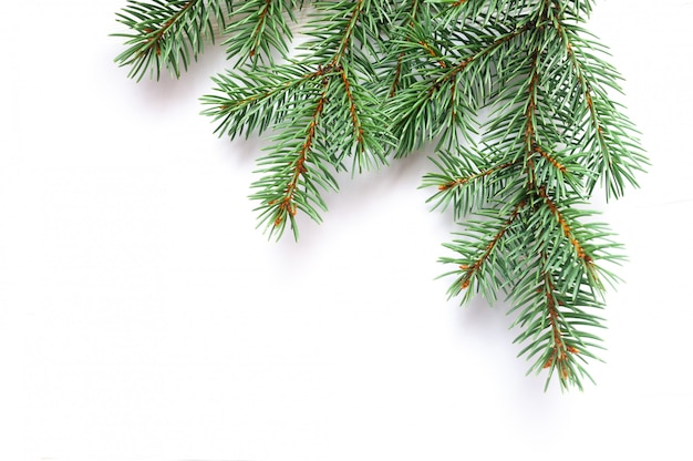 Xマスモミの木の枝が分離されました。松の枝クリスマスの背景 Premium写真