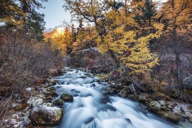 Yadingで秋の森のカラフルな滝 Premium写真