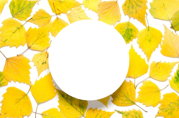Yellow autumn leaves with a circle on white paper Premium Photo