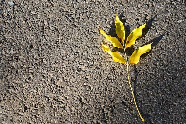 アスファルトの黄色い秋の葉 Premium写真
