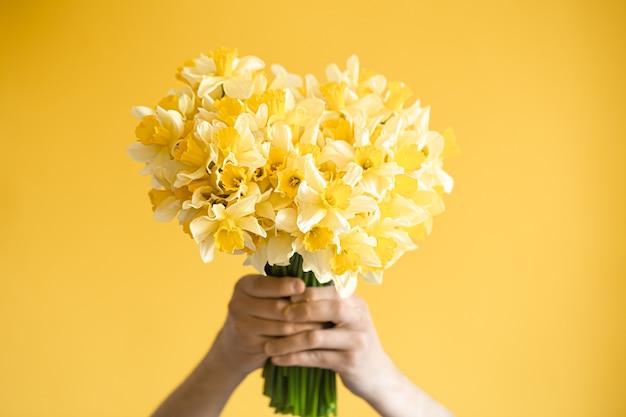 黄色の背景と黄色い水仙の花束を持つ男性の手。挨拶と女性の日のコンセプトです。 無料写真