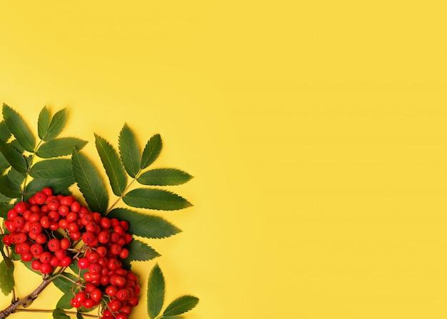 Желтый фон с кучей рябины с листьями Premium Фотографии
