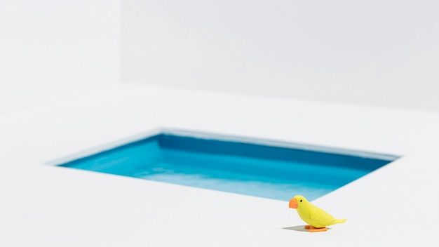 プールの横にある黄色の鳥 無料写真