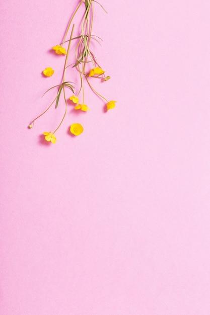 Желтые лютики на розовом фоне Premium Фотографии