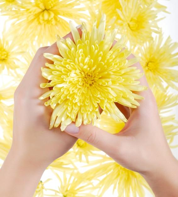 黄色のカモミール 無料写真