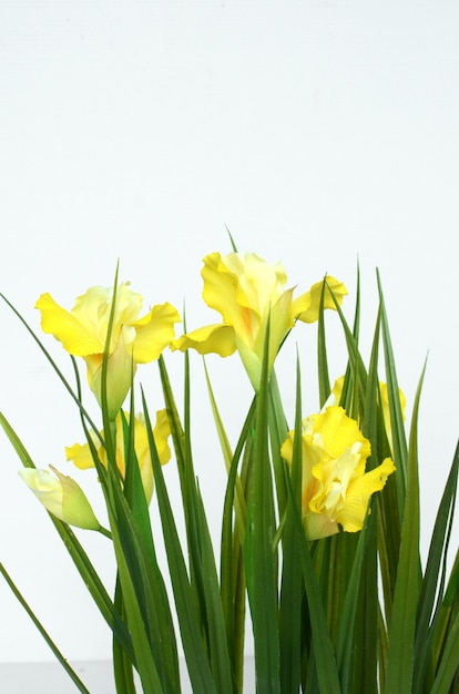Yellow carnation flowers for background photo premium download yellow carnation flowers for background premium photo mightylinksfo