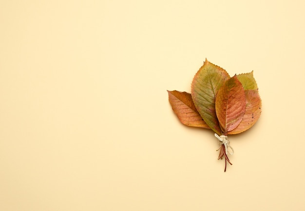 オレンジ色の背景に黄色の桜の葉 Premium写真